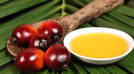 Palm oil properties